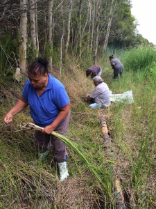 Aboriginal women artists from the Wake Up Time Group in Casino NSW collect reeds for traditional basket-weaving